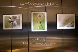 expo DNAS 22 07 2015