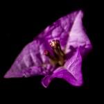 vol fleuri